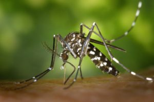 2016-05-20_-_pixabay_-_tiger-mosquito-49141_1920